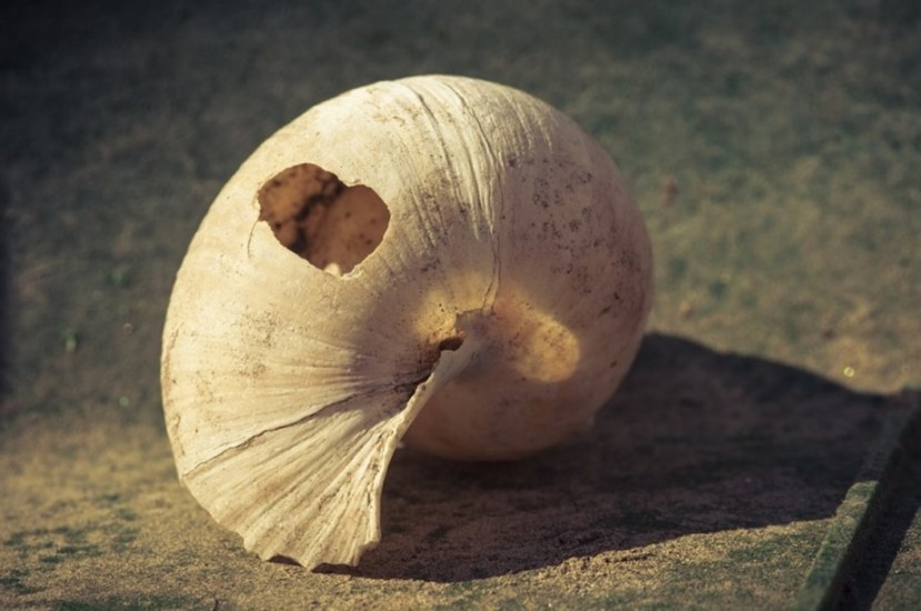 Restricted Shell
