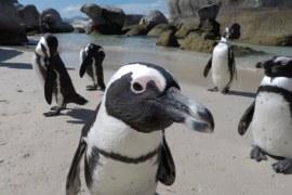 Dodanie komputera z Debianem do Active Directory i poświadczenia domenowe w Linux.